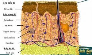 Cấu tạo của da