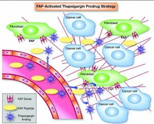 Sợi nguyên bào - Fibroblast